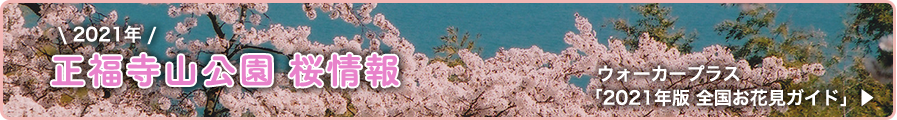 正福寺山公園 桜情報